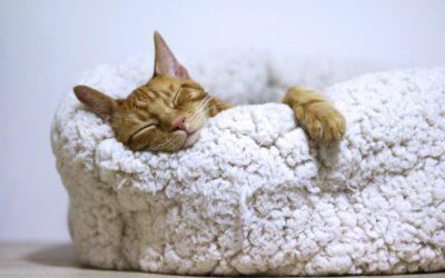 Sleep – What a beautiful thing